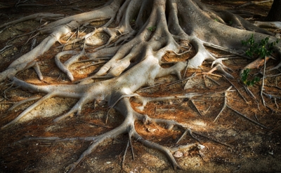 radici-roots-of-the-tree-3779986_1280