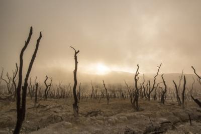 giorni-dead-trees-947331_1280